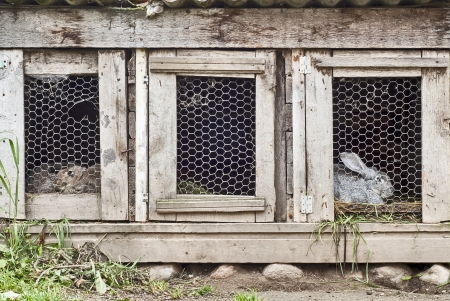 deux lapins sur trois cage section Banque d'images