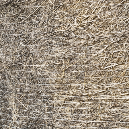 straw bale,  texture  background photo