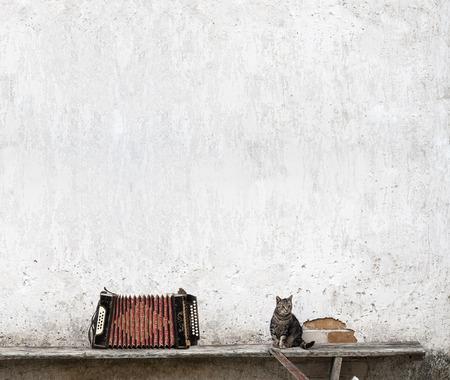 accord�on et chat tigr� assis sur le banc pr�s du mur