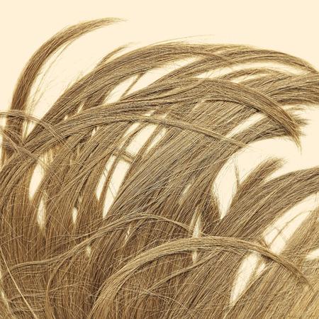 les cheveux de longue brillante fille brune