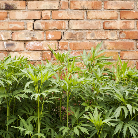 green plant near the red brick wall photo