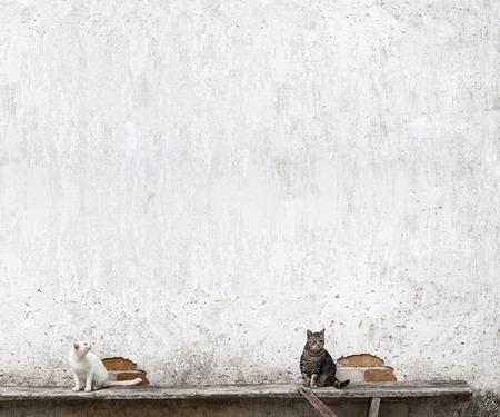 deux chats tabby assis sur le banc pr�s du mur Banque d'images