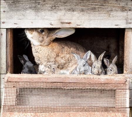 rabbit cage: Madre coniglio con coniglietti appena nati in gabbia