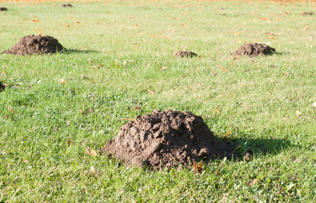 Mole mounds in the sport stadium in autumn background photo
