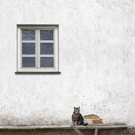 heads old building facade: tabby cat sitting on the bench near the wall with a window Stock Photo