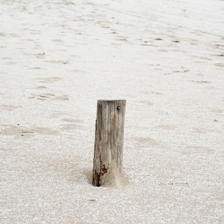 pole of wooden ruined pier, winter in the beach photo