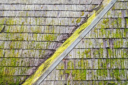Techo de tejas de madera con hongos y algas en la superficie
