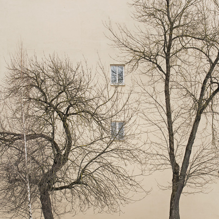 trees without leaves near the wall with windows