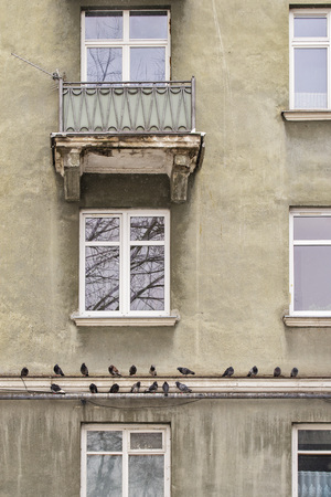 Pigeons perched in line along the ledge of weathered house