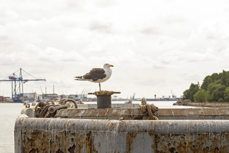 Big seagull standing on a pier near the seaport. Cloudy sky at the background.