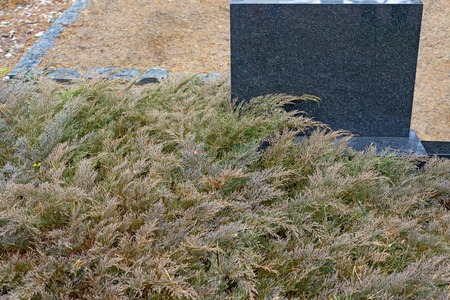Black gravestone surrounded by evergreen thuja leaves