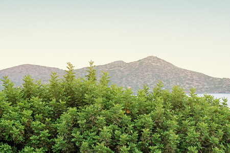 Green bushes and mountain landscape background in the morning