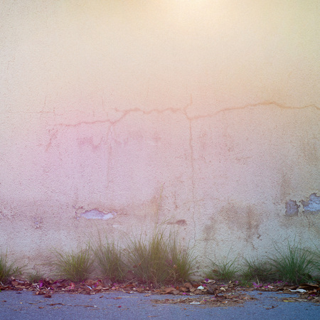 abandoned grunge cracked stucco wall, grass and dry leaves on the ground