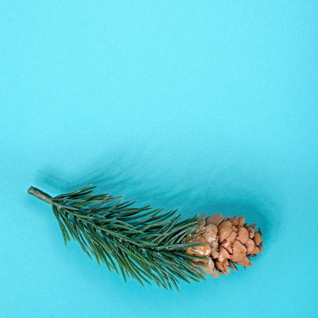 Fir tree branch with cone laying on pastel green metal table