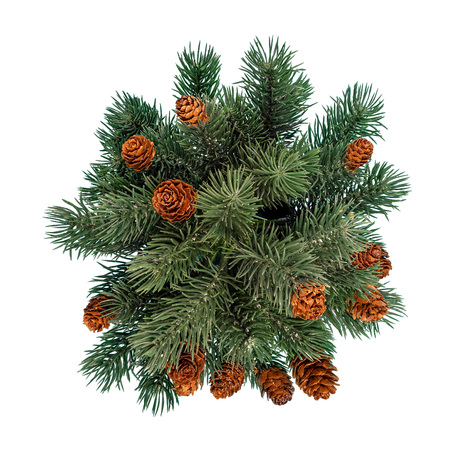 Green fir tree isolated on white background. Top view Banco de Imagens
