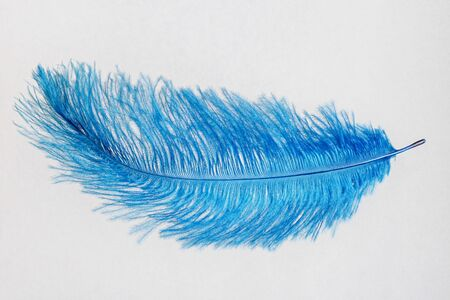 Blue feather isolated on a white background