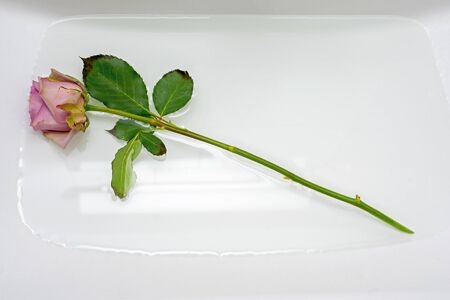 One pink rose in sink with water