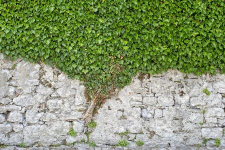 Green creeper on the brick cracked dirty wall Standard-Bild - 138938171