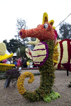 flower show: Hong Kong Flower Show 2014 Editoriali