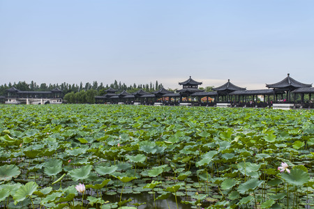 guangdong: Sanshui Lotus World of Foshan, Guangdong