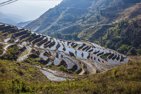 rice fields: Terraced rice fields ini Yuanyang County