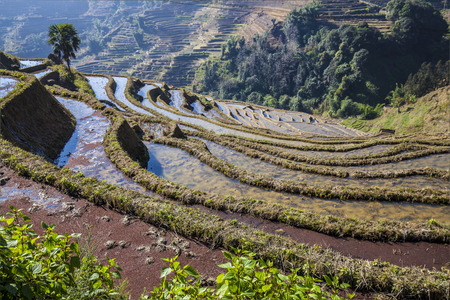 yuanyang: Terraced rice fields ini Yuanyang County