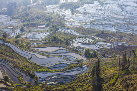 county: Terraced rice fields in Laohuzui Yuanyang County