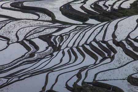 rice fields: Terraced rice fields in Laohuzui Yuanyang County