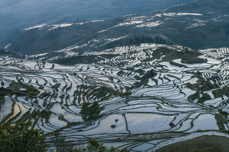 terraced: Terraced rice fields in Laohuzui Yuanyang County