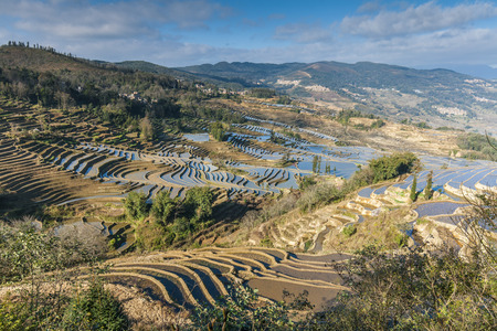 rice fields: Terraced rice fields in Yuanyang County