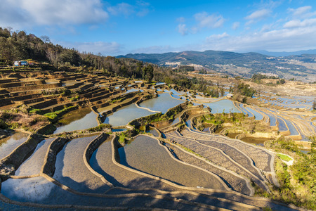 county: Terraced rice fields in Yuanyang County