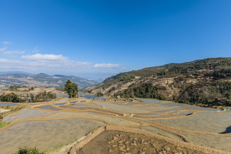 terraced: Terraced rice fields in Yuanyang County