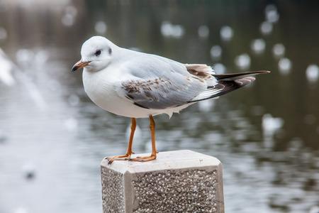 Seagull at Green Lake Park China photo