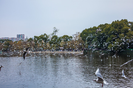 kunming: Green Lake Park Kunming Stock Photo