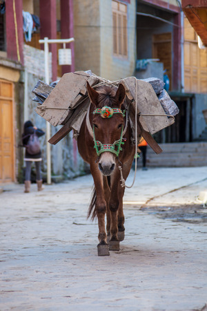 contryside: Donkeys are in the contryside for transportation