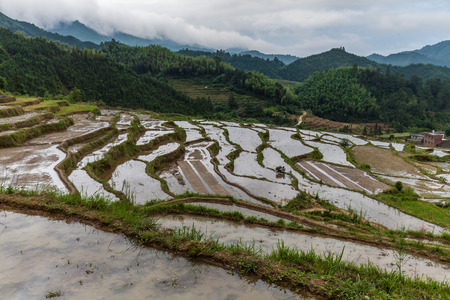 guangdong: Rice terrace in Guangdong Stock Photo