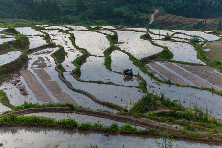 rice terrace: Rice terrace in Guangdong Stock Photo