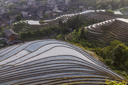 Longsheng Rice Terrace in Longsheng county, Guangxi Province, southern China