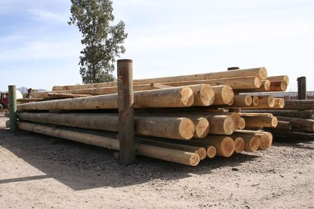 treated: Telephone poles at a treating plant