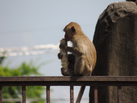 lop: Monkey Lop Buri