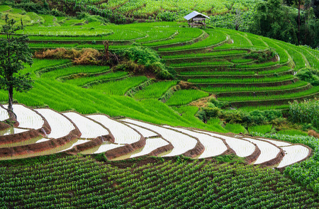 gradas: Las terrazas de arroz en la monta�a