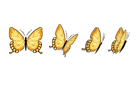 the same butterfly in four different sights Illustration