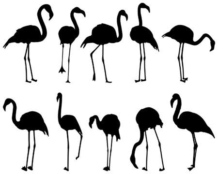Flamingo, ten different postures Vector