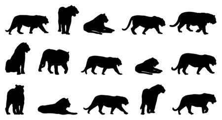panthera: Tigre, quindici diverse posture Vettoriali