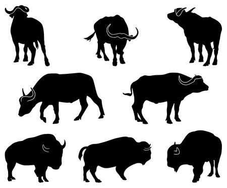 ocho siluetas negras de búfala africana y americana
