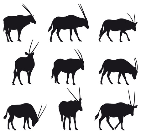 wildlife: Oryx gazela: long horned gazelle black silhouettes, nine different postures