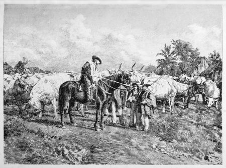 old photo: Old illustration of Garibaldi trading oxen.