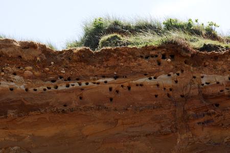 burrows: Breeding Burrows at Morsum Red CliffGermany Stock Photo