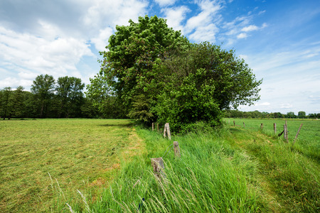 Hiking trail in Nature Reserve  Rhineland