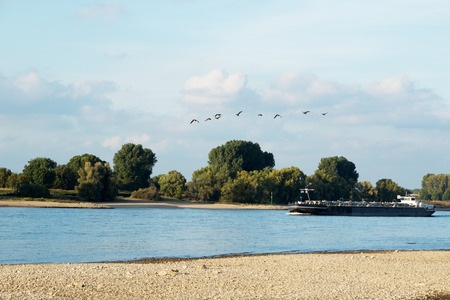 Geese overtaking Boat on River Rhine at Duesseldorf Germany